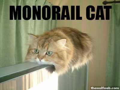 monorail-cat